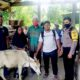 Masyarakat Drien Berumbang Abdya terima bantuan sapi dari dana desa.