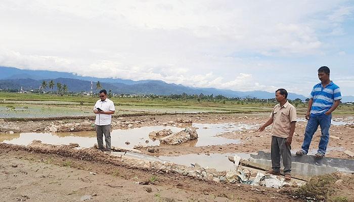Tanggul jebol, ratusan hektare sawah di Abdya terancam gagal tanam.