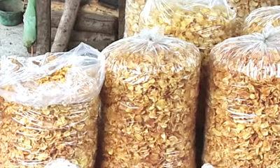 Potensi Keripik Saree oleh-oleh khas Seulawah Aceh.