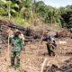 Satgas Pamtas Yonif 623/BWU bantu warga buka lahan perkebunan.