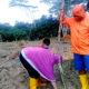 Seriusi tanam masal jagung, Asisten II Pemkab Nunukan sediakan lahan untuk percontohan.
