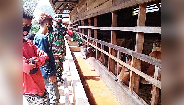 Babinsa Pekan Bada ajak masyarakat untuk menekuni usaha peternakan sapi.