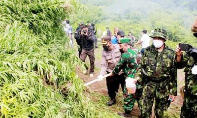 Pemusnahan ladang ganja seluas dua hektar di Seulimuem.