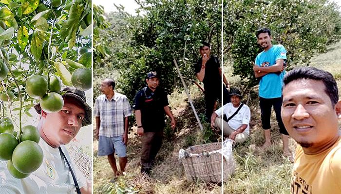 Segarnya menikmati jeruk sambil wisata alam di pekebunan Pak Rajali.
