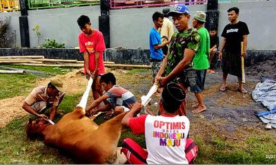 Rokat tolak Corona, warga desa Rombasan sembelih sapi.