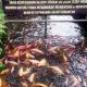 Saoeng Noempang Ngadem RTH Puri Pamulang, Sarana Edukasi Lingkungan Bagi Anak
