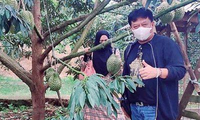 Durian Musangking Bawor Duri Hitam Booming di Malang Raya, Agusdono: Perlu Pembinaan Pemerintah